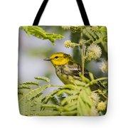 Black-throated Gren Warbler Tote Bag