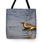 Blackbelied Plover Tote Bag