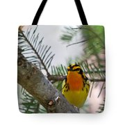 Blackburnian Warbler Looking At You Tote Bag