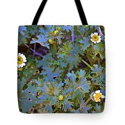 White Wooly Daisies On Borrego Palm Canyon Trail In Anza-borrego Desert State Park-ca Tote Bag
