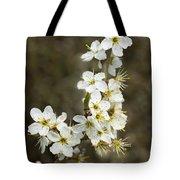 Blackthorn Or Sloe Blossom  Prunus Spinosa Tote Bag