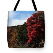 Blazing Maple Tree Tote Bag