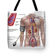 Blood Pressure And Circulatory System Tote Bag by Stocktrek Images