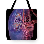 Blood Supply Of The Kidneys Tote Bag