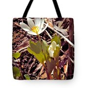 Bloodroot Reaching For The Spring Sun Tote Bag