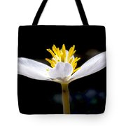 Bloodroot Tote Bag by Steven Ralser