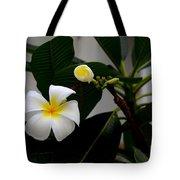 Blooming Frangipani Flower Alongside Bud Tote Bag