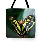 Blooms And Butterfly6c Tote Bag