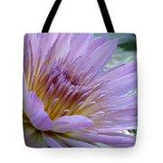 Bloom's Blush Tote Bag
