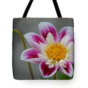 Blossoms Abound Tote Bag
