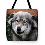 Blue And Brown Eyed Husky Tote Bag