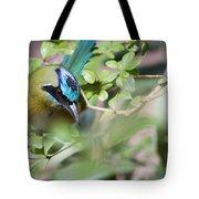 Blue-crowned Motmot Tote Bag by Rebecca Sherman