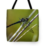 Blue Dragonfly 3 Tote Bag