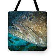 Blue-eyed Grouper Fish Tote Bag