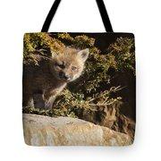 Blue Eyes Baby Fox Tote Bag