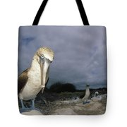 Blue-footed Booby Galapagos Islands Tote Bag