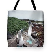 Blue-footed Booby Pair Courting Tote Bag