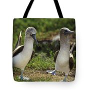 Blue-footed Booby Pair In Courtship Tote Bag