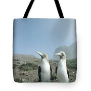 Blue-footed Booby Pair With Nesting Tote Bag