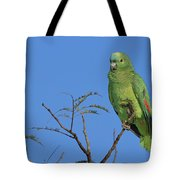 Blue-fronted Parrot Emas National Park Tote Bag