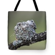 Blue-gray Gnatcatcher Nest Tote Bag