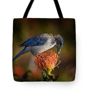 Blue Jay 1 Tote Bag