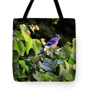 Blue Jay In A Tree Tote Bag