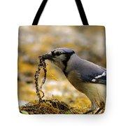 Blue Jay Nest Building Tote Bag