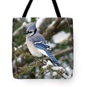 Blue Jay On Hemlock Tote Bag