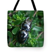 Blue Lined Beetle Tote Bag