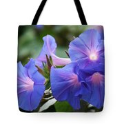 Blue Morning Glory Wildflowers - Convolvulaceae Tote Bag
