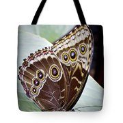 Blue Morpho Butterfly Costa Rica Tote Bag