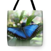 Blue Morpho Butterfly Dsc00575 Tote Bag