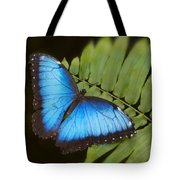 Blue Morpho Butterfly On Fren Dsc00441 Tote Bag