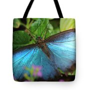 Blue Morpho Tote Bag