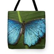 Blue Morpho - Morpho Peleides Tote Bag