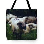 Blue Mountain Sheep Tote Bag