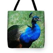 Blue Peafowl Tote Bag