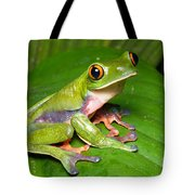 Blue-sided Tree Frog Tote Bag