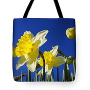 Blue Sky Spring Bright Daffodils Flowers Tote Bag