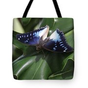 Blue-spotted Charaxes Butterfly #2 Tote Bag