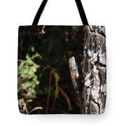 Blue Throated Lizard 1 Tote Bag