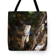 Blue Throated Lizard 4 Tote Bag