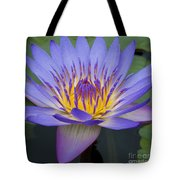 Blue Water Lily - Nymphaea Tote Bag by Heiko Koehrer-Wagner