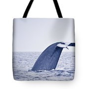 Blue Whale Tail Fluke With Remoras Tote Bag