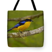 Blue-winged Mountain Tanager Tote Bag
