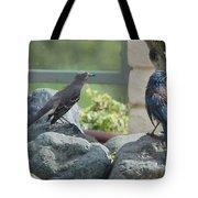 Bluejay And Mockingbird Tote Bag