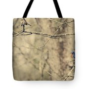 Bluebird And Sparrow Tote Bag by Heather Applegate