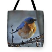 Bluebird In The Snow. Tote Bag