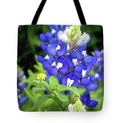 Bluebonnets Blooming Tote Bag